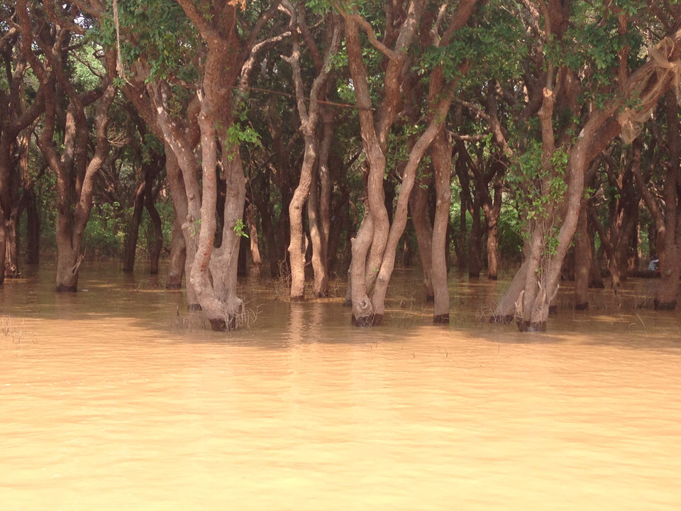 Underwater Trees in Cambodia